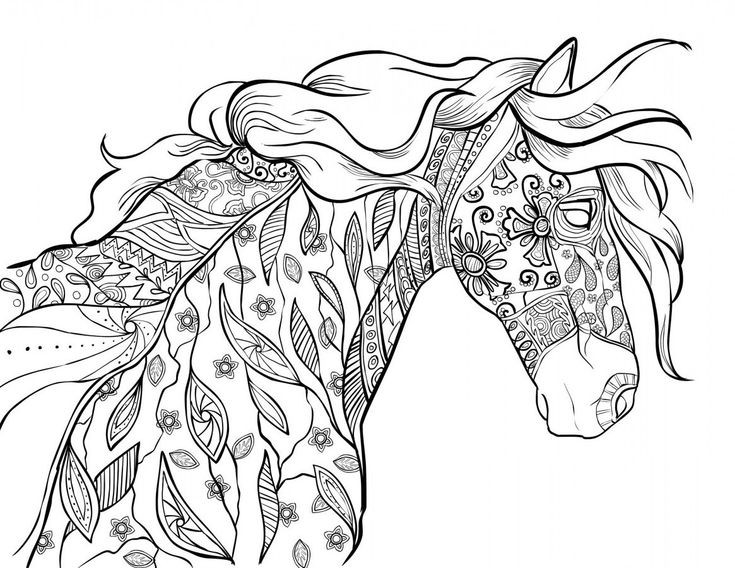 Adult Coloring Pages Horses  The Amazing World of Horses Adult Coloring Book I Cindy