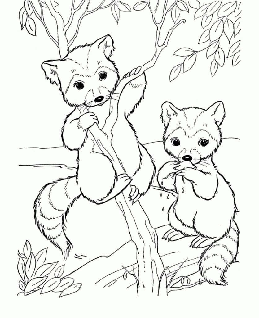 Cute Animal Coloring Pages For Adults  Free Cute Raccoon Cartoon Animal Coloring Pages Printable