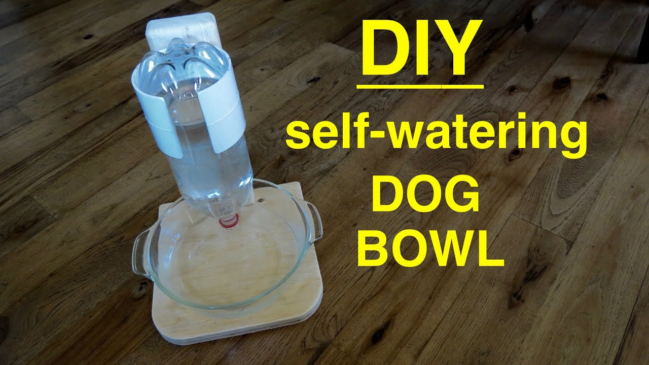 DIY Automatic Dog Waterer  DIY Self Filling Water Bowl for Your DOG CAT that