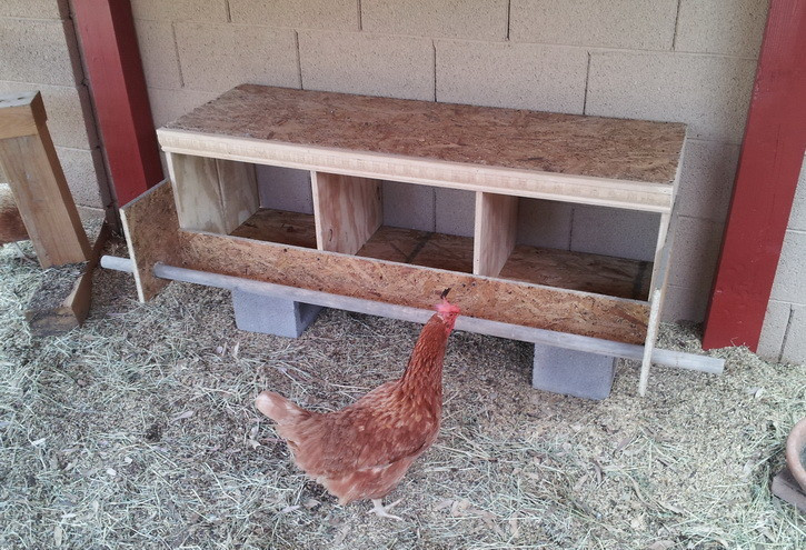 DIY Chicken Nest Box  How To Build a Chicken Nesting Box