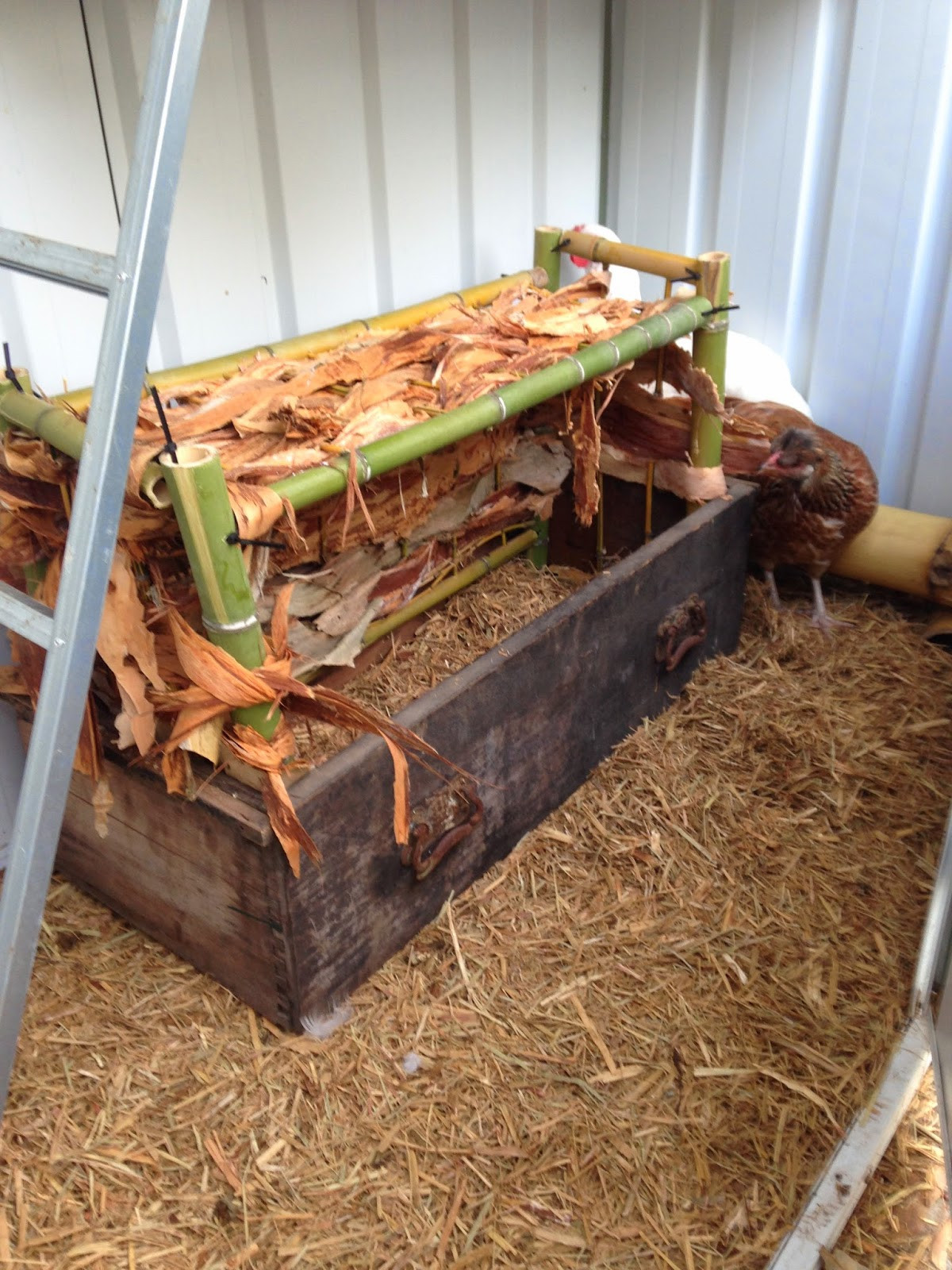 DIY Chicken Nest Box  This Small Town Life Backyard DIY Part 3 Chicken Nesting Box