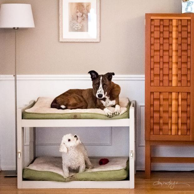 DIY Doggie Bed  DIY Dog Bunk Beds 8 Steps with
