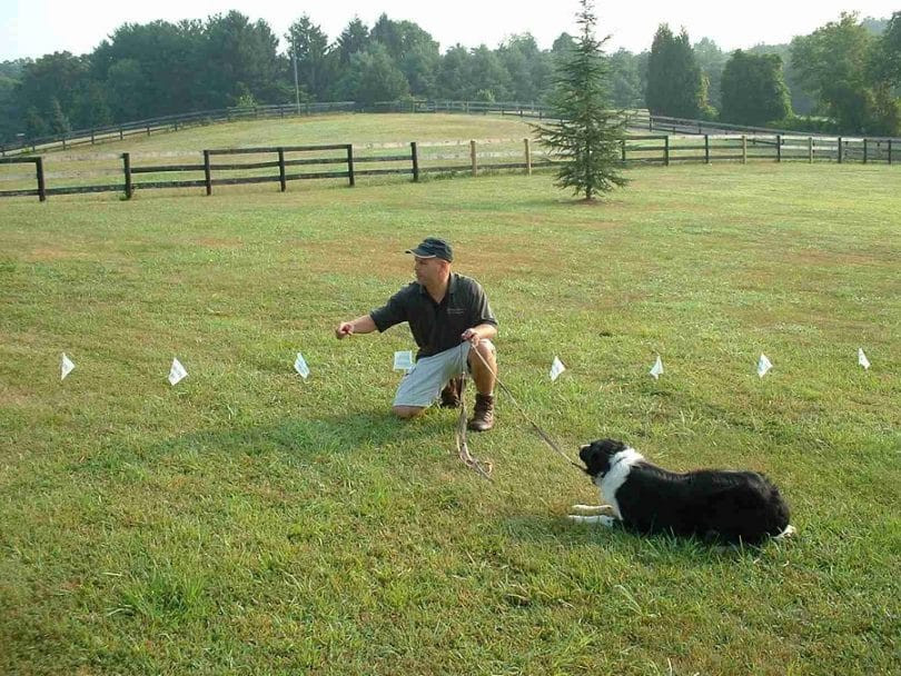 DIY Electric Dog Fence  DIY Dog Fence A Personal Solution for Your Dog's Perimeter