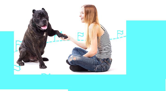 DIY Electric Dog Fence  Dog Fence DIY Store – Dog Fence DIY