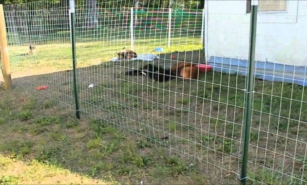 DIY Electric Dog Fence  Hot Wire Fence For Dogs Goldenacresdogs