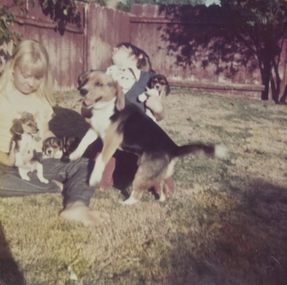 DIY Electric Dog Fence  Electric DIY Dog Fence — Design & Ideas DIY Dog Fence in
