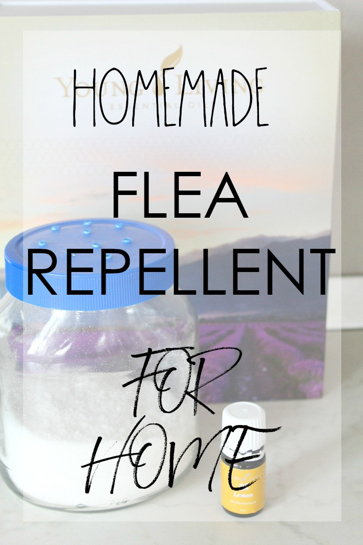 DIY Flea Spray For Home  Flea Repellent For Home Using Safe Natural Ingre nts