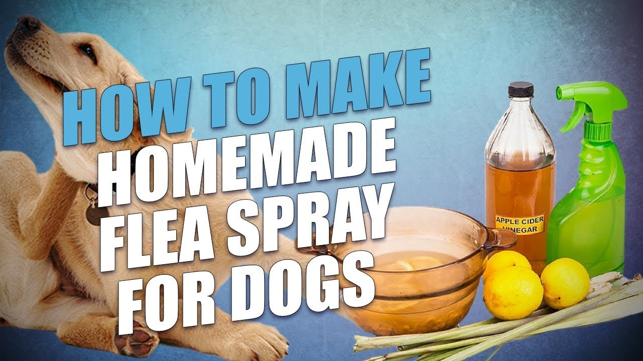 DIY Flea Spray For Home  DIY Homemade Flea Spray for Dogs Cheap and Natural