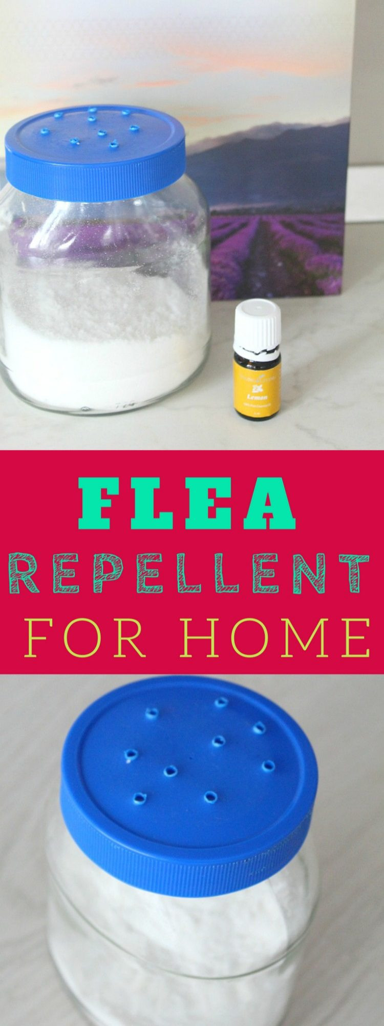 DIY Flea Spray For Home  The Ultimate Homemade Flea Repellent For Your Home