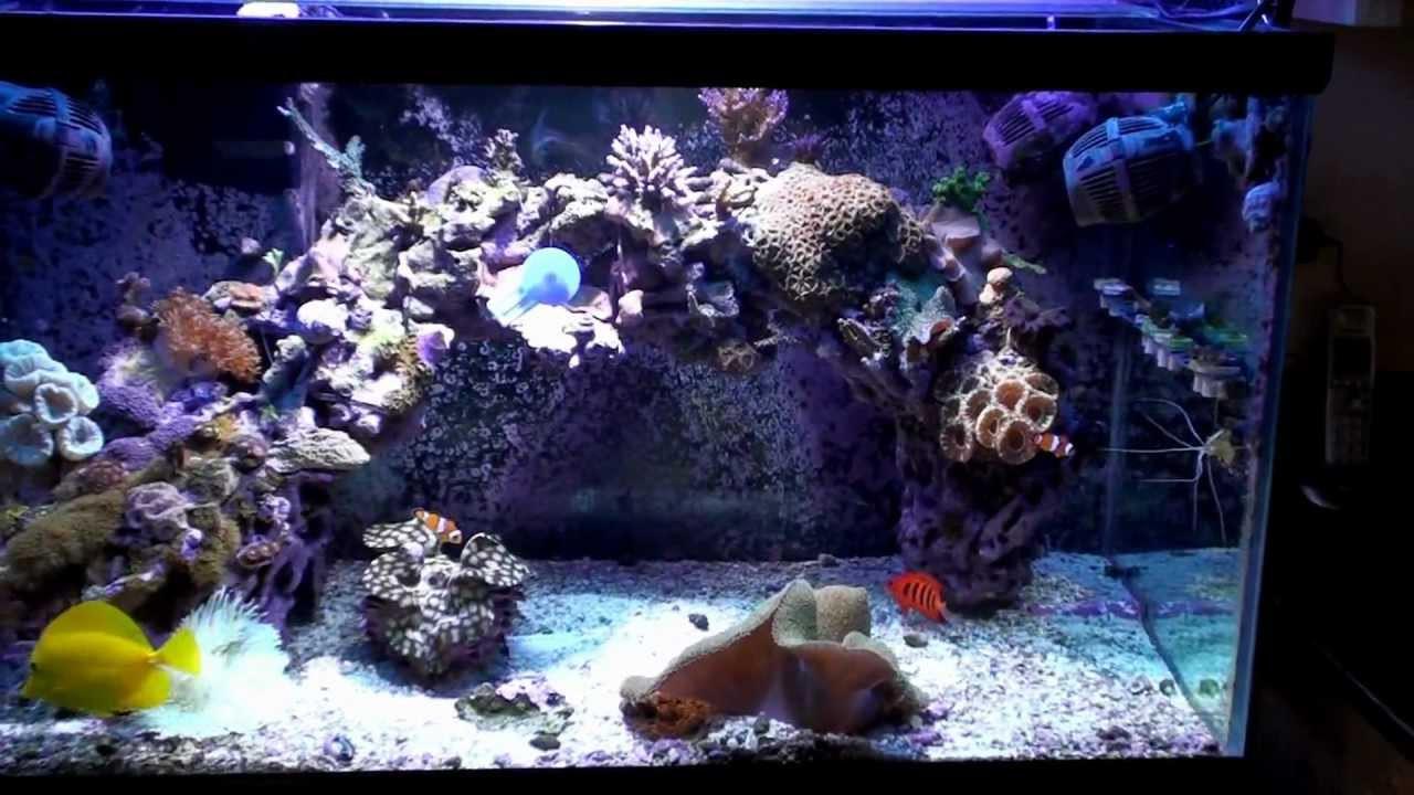DIY Frag Rack  Reef DIY Frag Rack