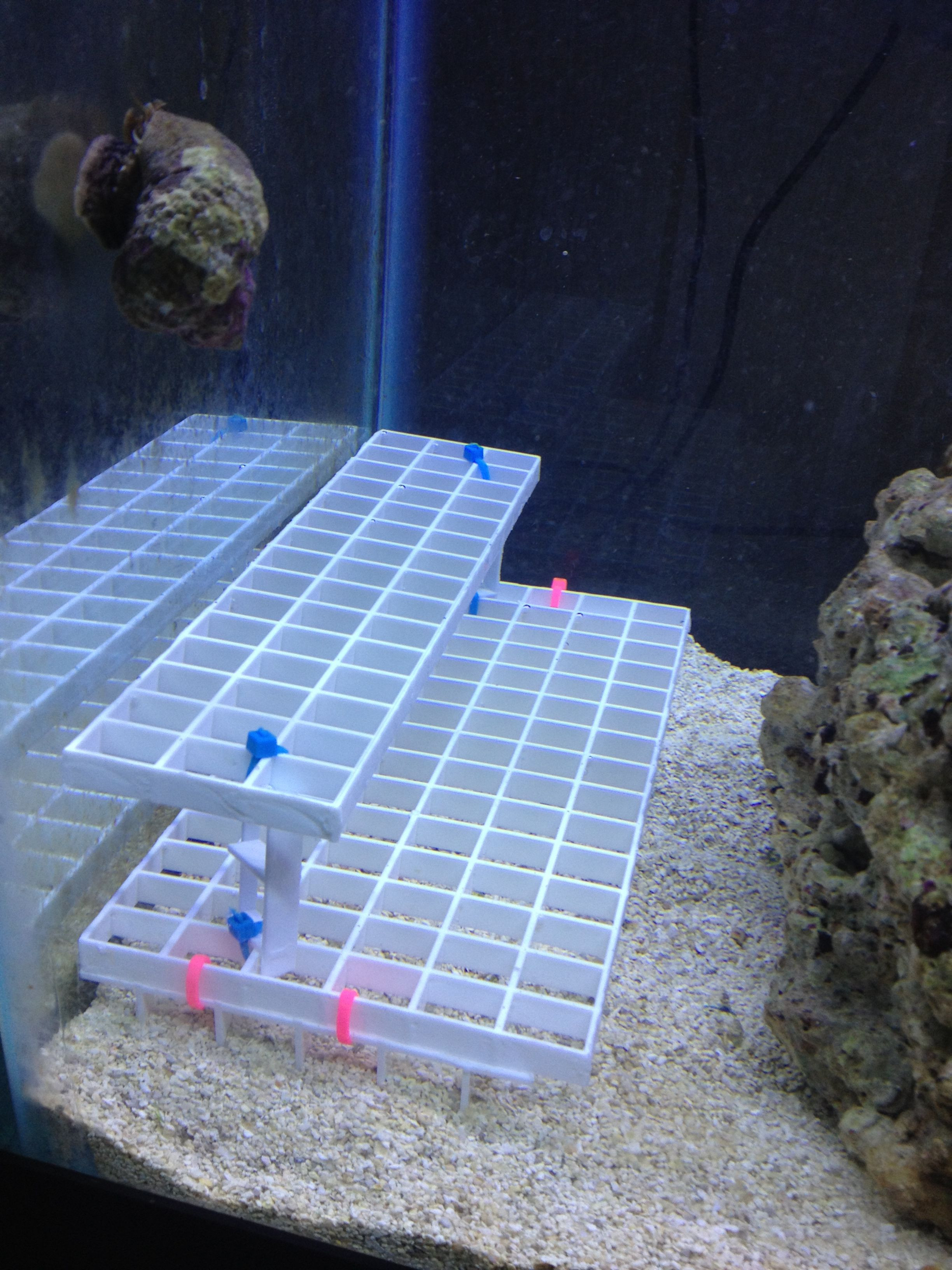 DIY Frag Rack  Coral Frag Rack Super easy and cheap to build your self