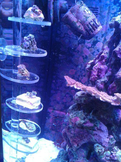 DIY Frag Rack  DIY acrylic vertical frag rack Reef Tank
