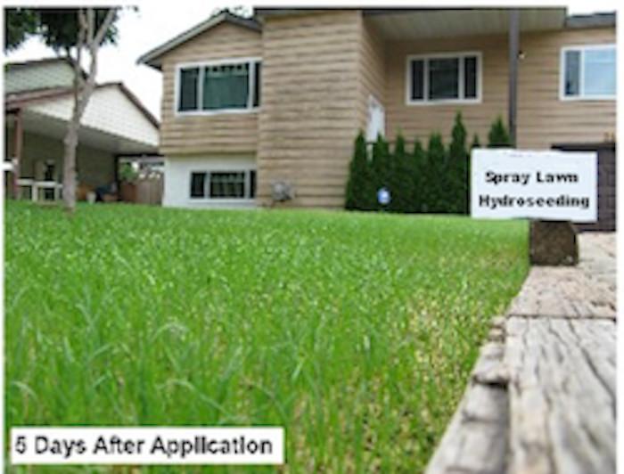 DIY Hydroseed Kit  Spray Lawn Hydroseeding