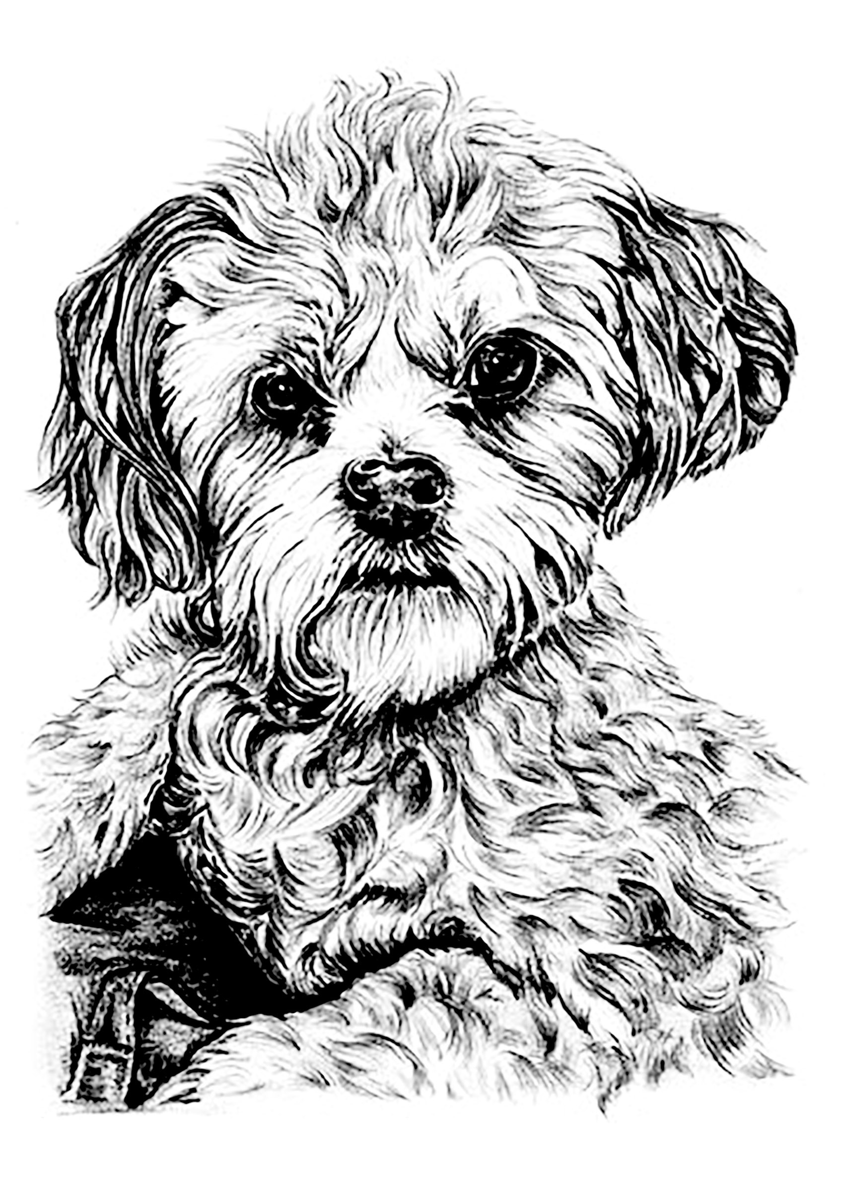 Dog Coloring Books For Adults  Dog Dogs Adult Coloring Pages