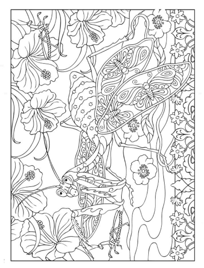 Dover Coloring Books For Adults  556 best images about Coloring on Pinterest