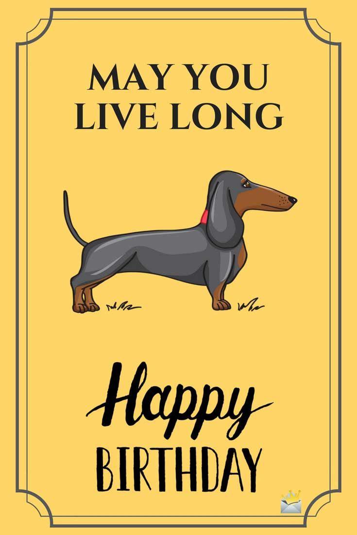 Funny Happy Birthday Photo  Best 25 Happy birthday ideas on Pinterest