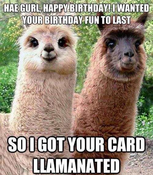 Funny Happy Birthday Photo  Funny Llama