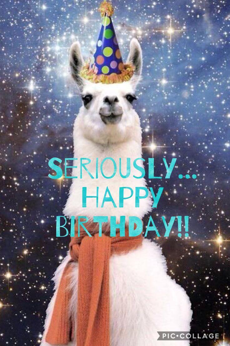 Funny Happy Birthday Photo  Best 25 Funny birthday quotes ideas on Pinterest