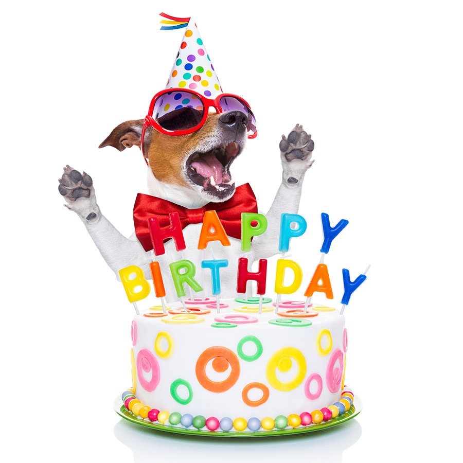 Funny Happy Birthday Photo  15 Funniest Happy Birthday Cards