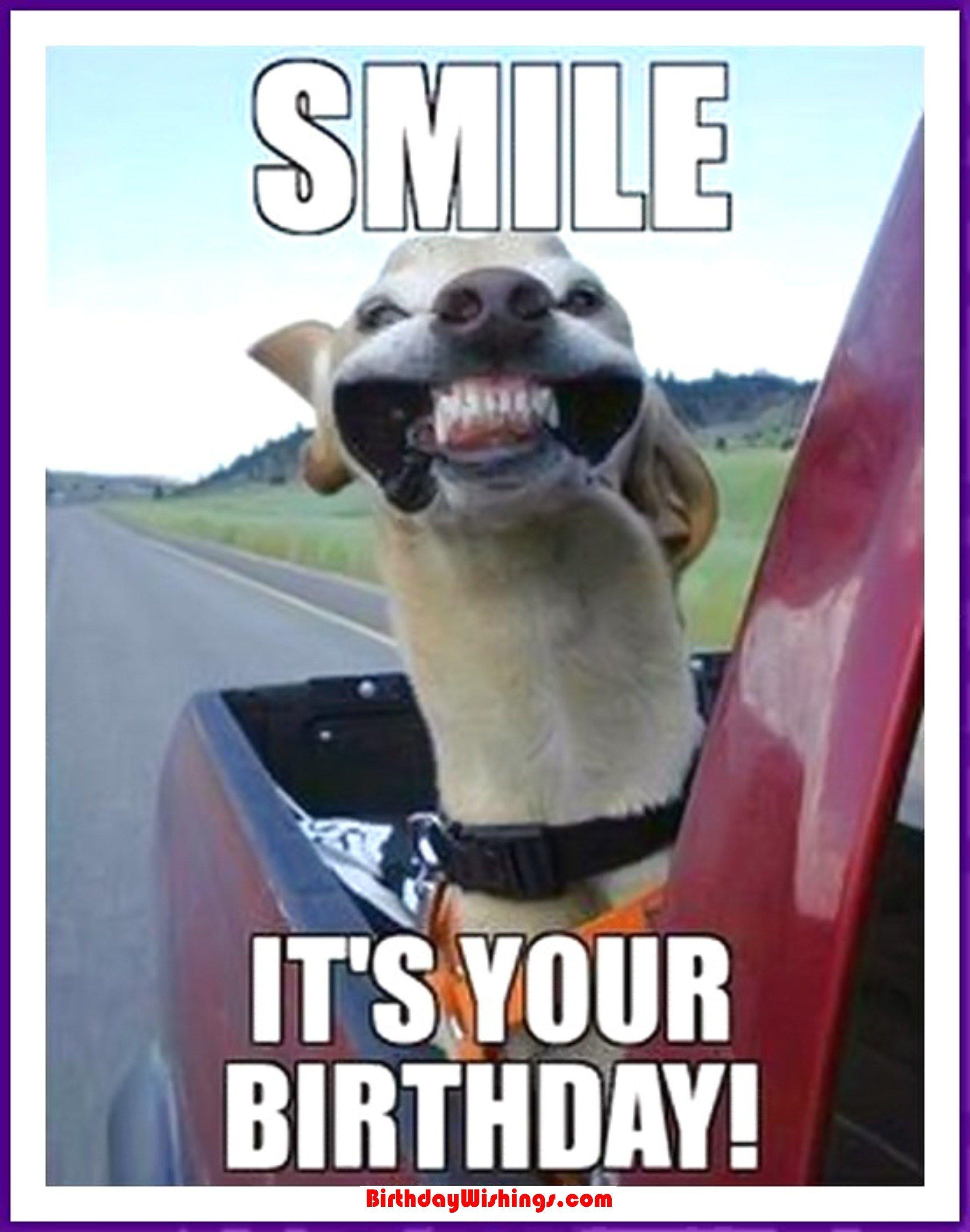 Funny Happy Birthday Photo  Funny Happy Birthday Memes With cats Dogs & Funny Animals