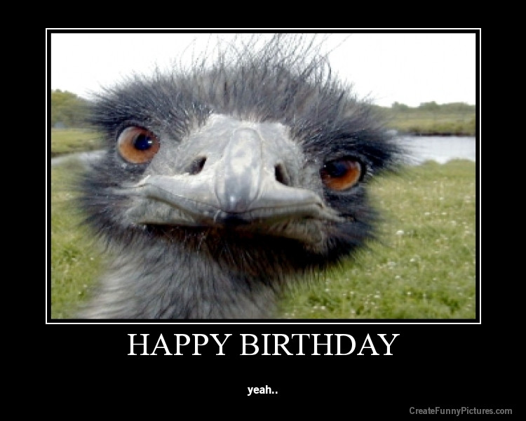 Happy Birthday Images Funny  Funny funny happy birthday pictures