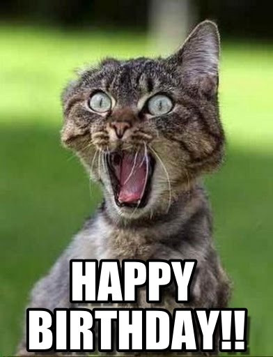 Happy Birthday Images Funny  Funny Happy Birthday Cat Memes Screaming Sister Litle Pups