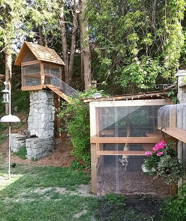 Outdoor Cat Enclosure DIY  13 Cool Catios for Your Feline Friend