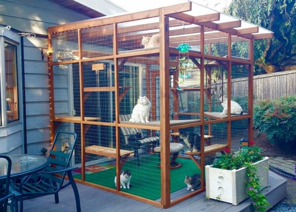 Outdoor Cat Enclosure DIY  Catios Can Be Built in Three Hours or Less and Let Your