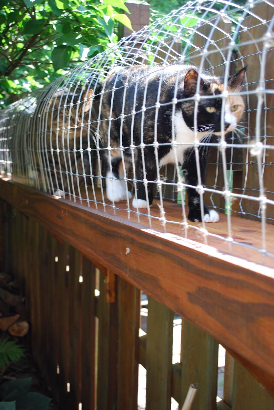 Outdoor Cat Enclosure DIY  Easy DIY Cat Enclosure Cuckoo4Design