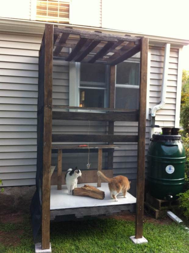 Outdoor Cat Enclosure DIY  Best 25 Outdoor cat tree ideas on Pinterest