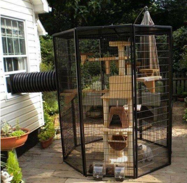 Outdoor Cat Enclosure DIY  Home Design Garden & Architecture Blog Magazine
