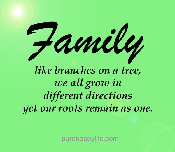 Positive Family Quotes  quotes more on purehappylife Family like branches