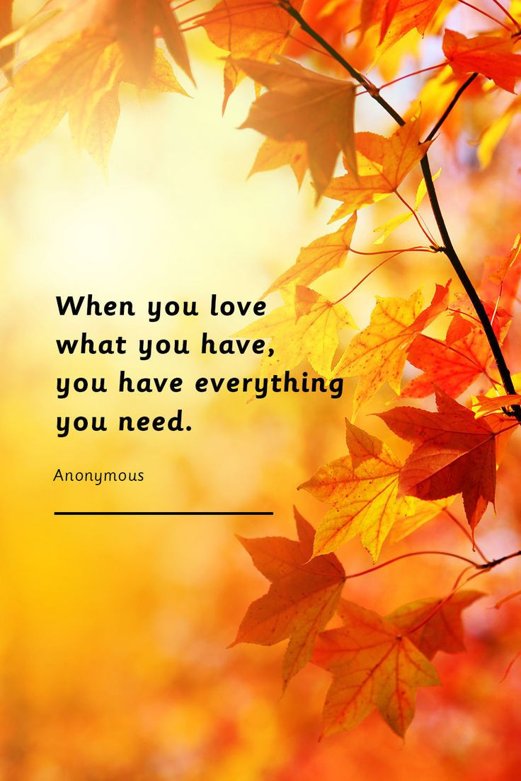 Thanksgiving Quotes  25 best Thanksgiving quotes ideas on Pinterest