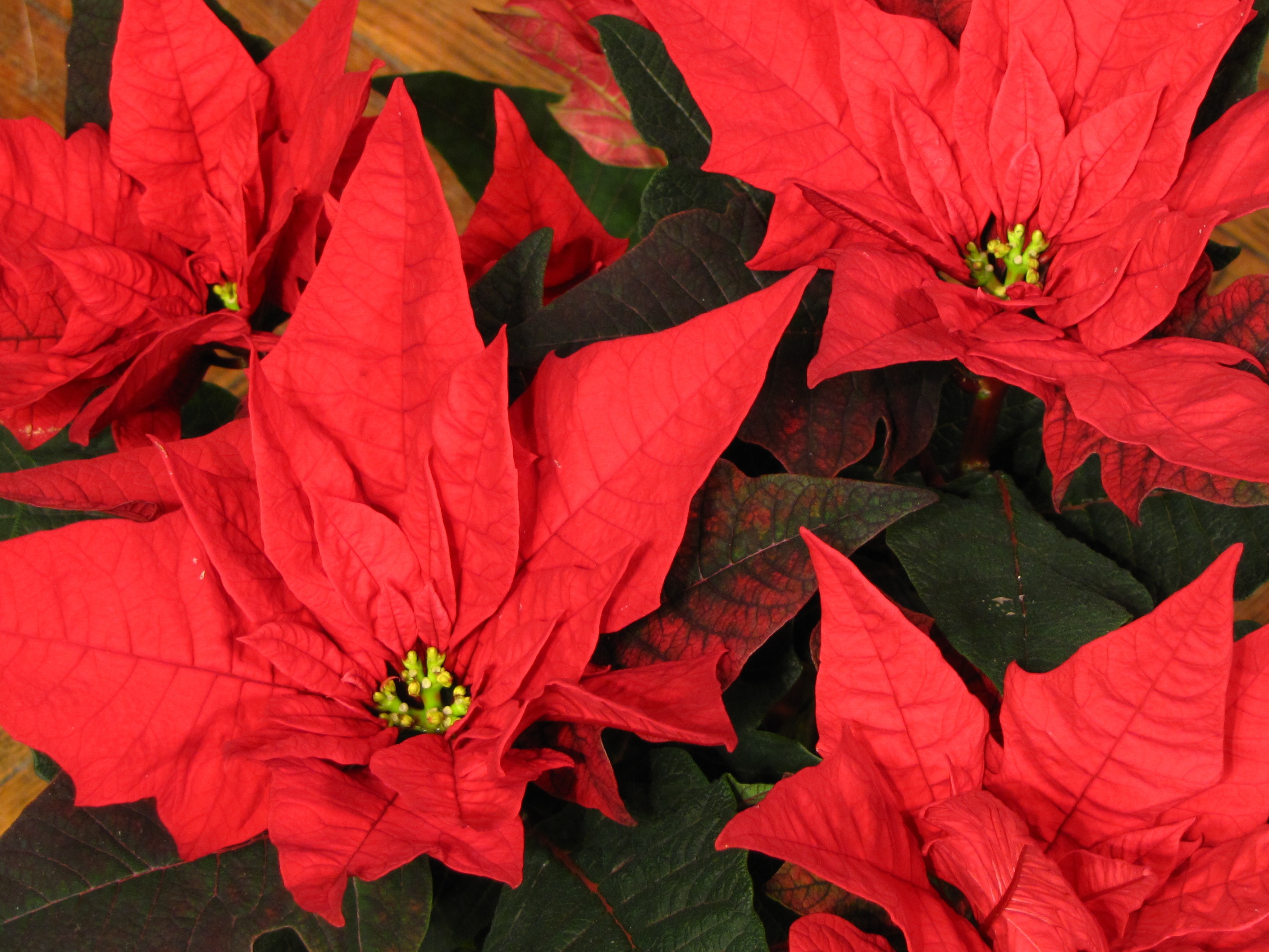Christmas Flower Delivery  Christmas Flower Delivery – First Church Seattle