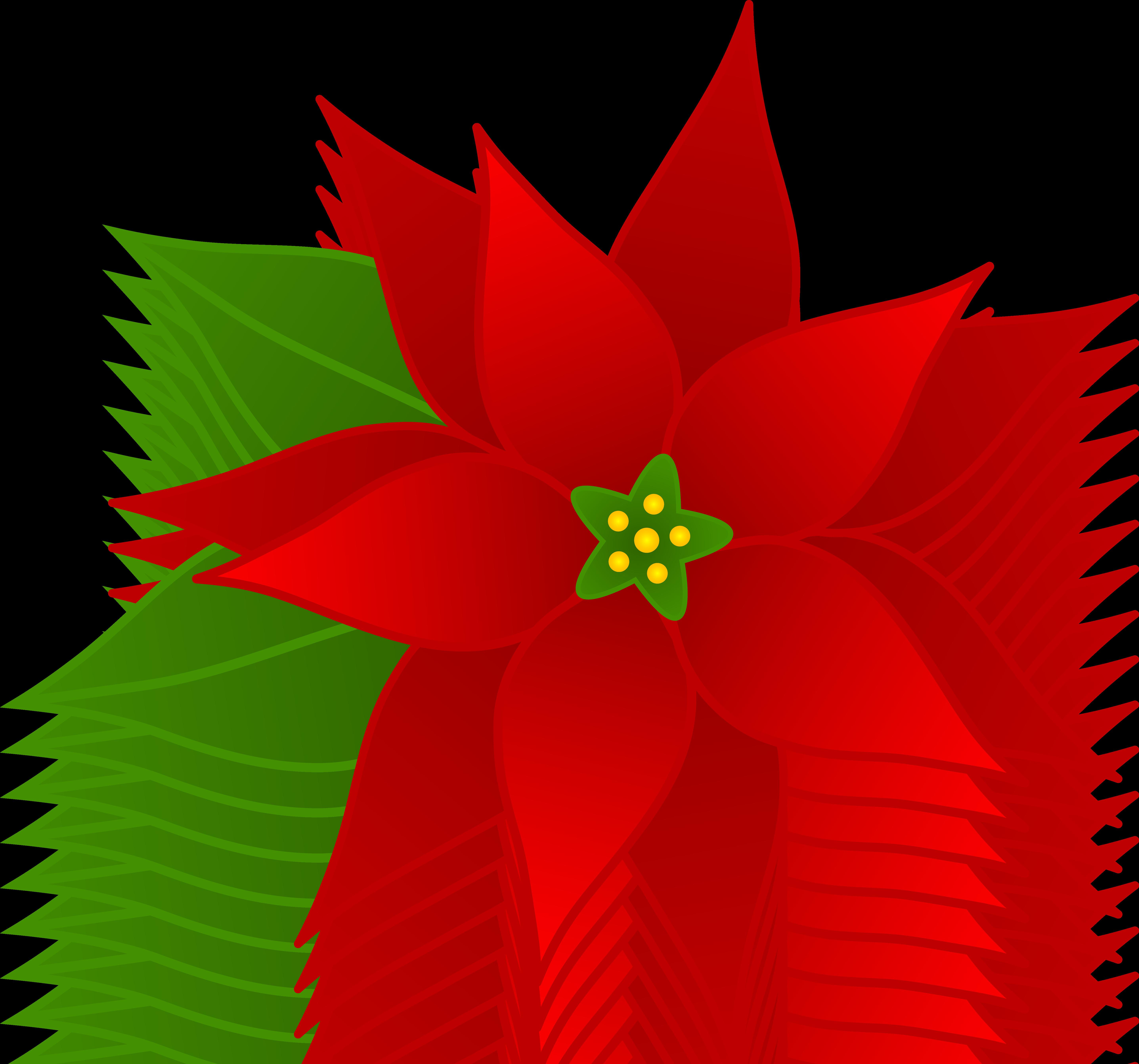 Christmas Flower Images  Christmas Poinsettia Flower Free Clip Art