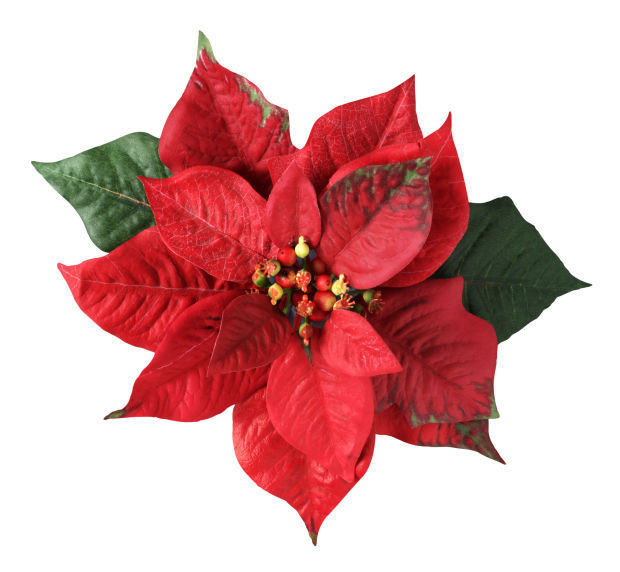Christmas Flower Images  Ten things to know about a Christmas flower favorite
