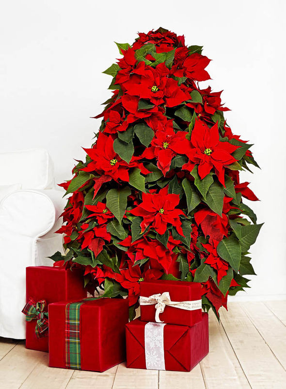 Christmas Flower Images  Florists create dress from poinsettia flowers