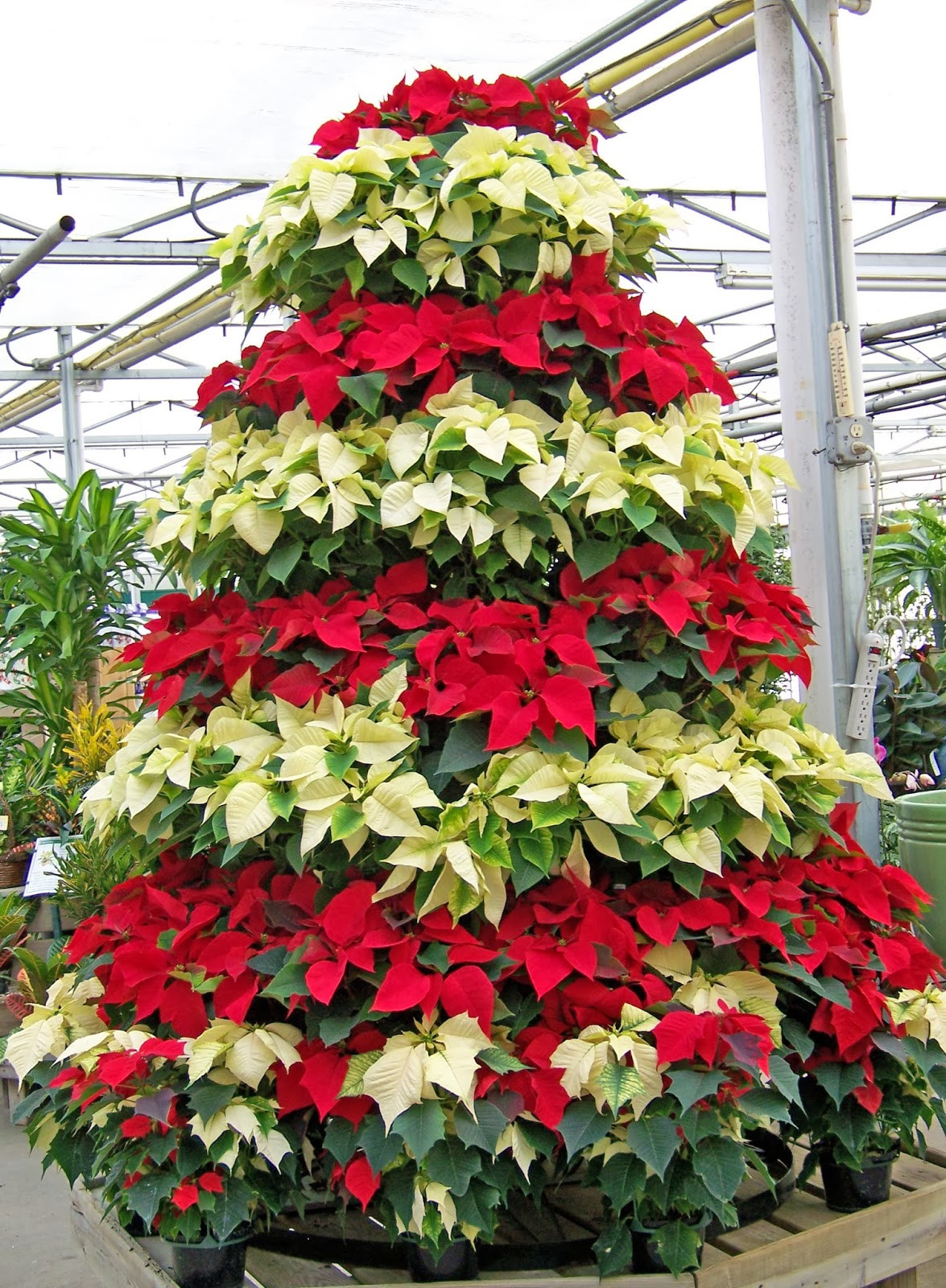 Christmas Flower Images  Decorating Your Home for Christmas