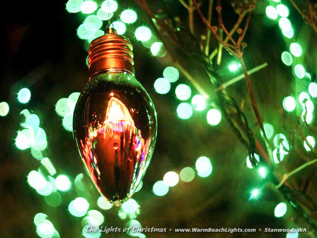Christmas Lighting Videos  The Lights of Christmas Festival 2018 The Lights of