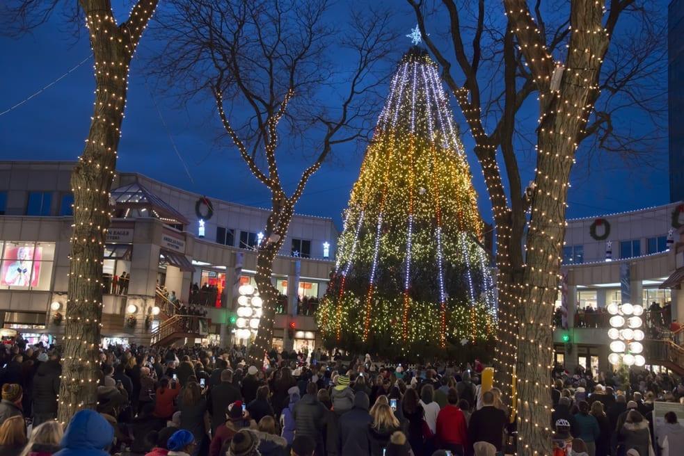 Christmas Tree Lighting 2019  Blink