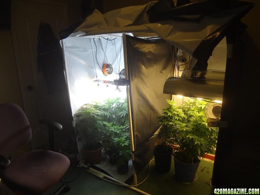 DIY Weed Grow Box  First Grow Bag Seed DIY Grow Box FFOF with Nutes