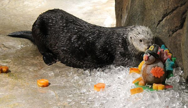 Georgia Aquarium Thanksgiving  30 best November 2015 images on Pinterest