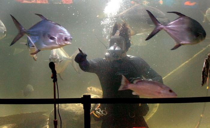Georgia Aquarium Thanksgiving  Atlantic City Aquarium offers slimy slippery and pretty