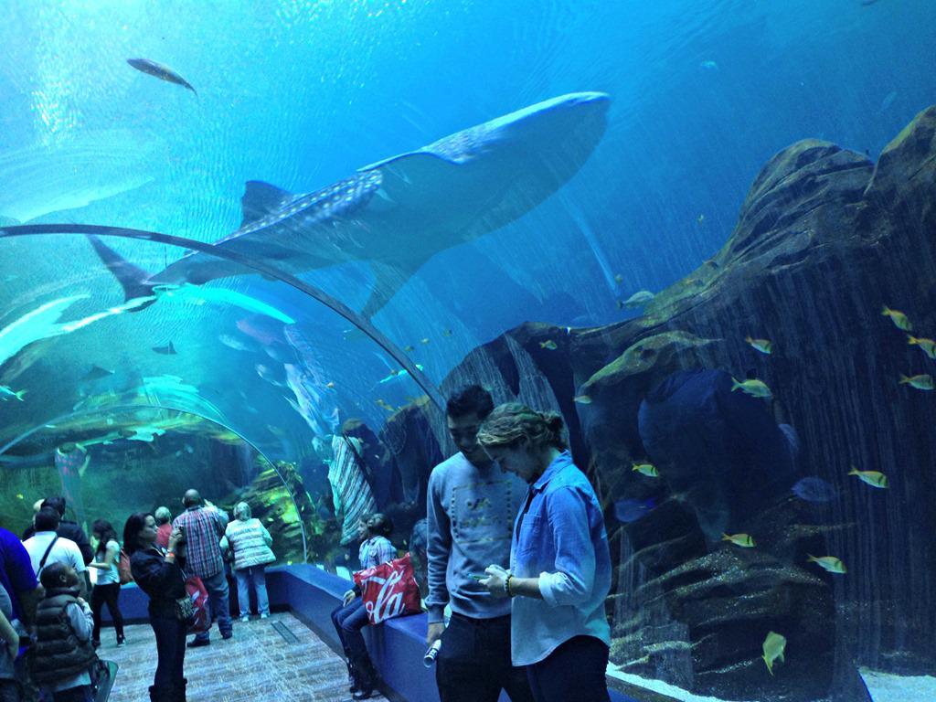 Georgia Aquarium Thanksgiving  Georgia Tibits