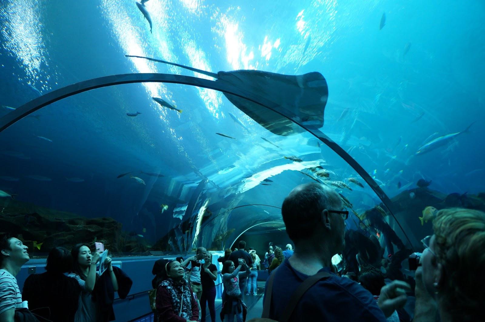 Georgia Aquarium Thanksgiving  Living in Wonders Part 9 Thanksgiving Dinner with