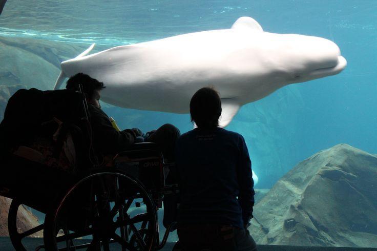 Georgia Aquarium Thanksgiving  17 Best images about Georgia Aquarium Blog on Pinterest