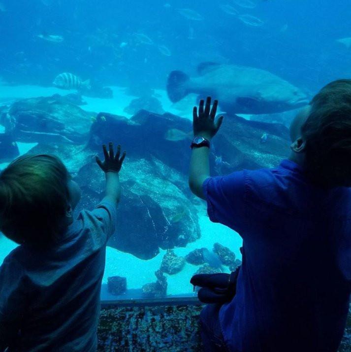 Georgia Aquarium Thanksgiving  Georgia Aquarium GeorgiaAquarium