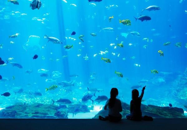 Georgia Aquarium Thanksgiving  No Place Like Home 10 Reasons Atlanta Rocks