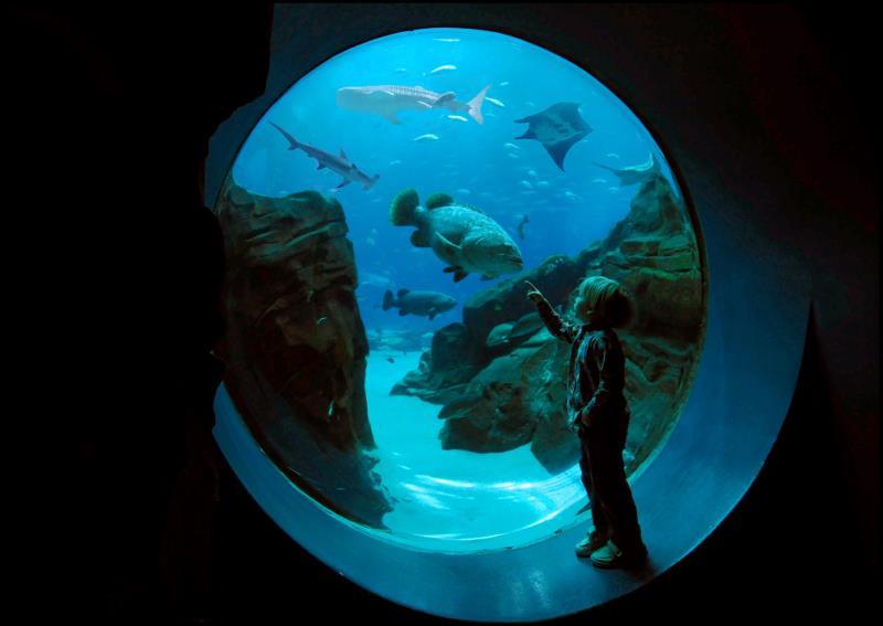 Georgia Aquarium Thanksgiving  Splash into Toddler Time at the Georgia Aquarium