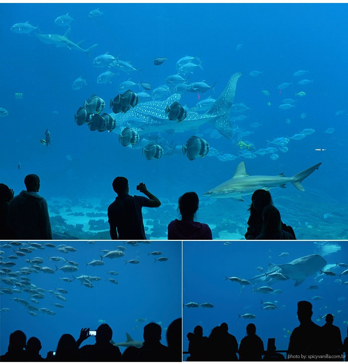 Georgia Aquarium Thanksgiving  48 best images about Field Trips on Pinterest